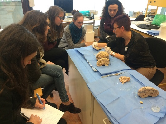 Human brain dissection organized by the Belgian Brain Council in Belgium