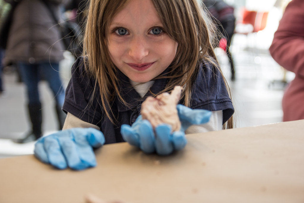 A little girl holds a brain at the BioBase in Harlem, New York City, organized by BioBus.