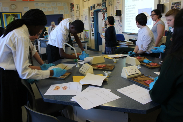 Brain dissections at a school in London organized by the British Brain Bee
