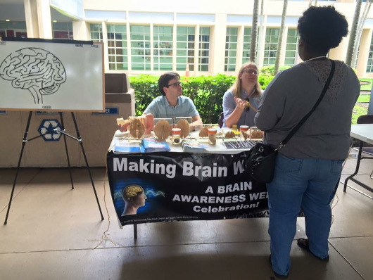 A display of brains during Florida Atlantic University's BAW festivities