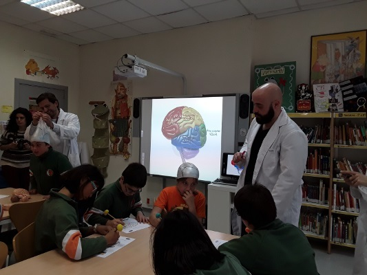 Students learn about the brain at an event organized by Institute for Biomedical Research (IIBM) in Spain