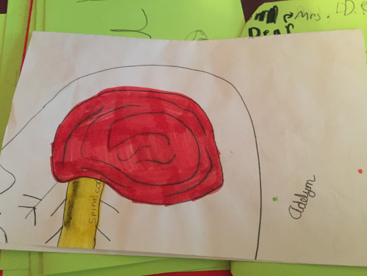 A drawing of the brain from an event organized by Lodi Elementary School in Wisconsin