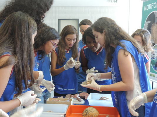 Examining brains during an event organized by Fluminense Federal University, Biology Institute, NuPEDEN in Brazil