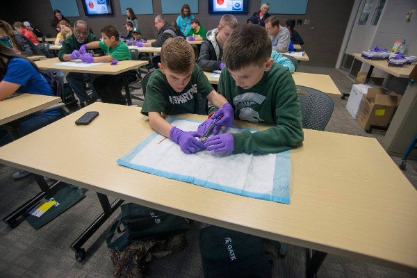 People dissect brains at an event organized by Michigan State University