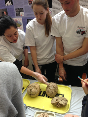 NYU students talk about real brain specimens at an event organized by NYU School of Medicine as part of BraiNY in New York