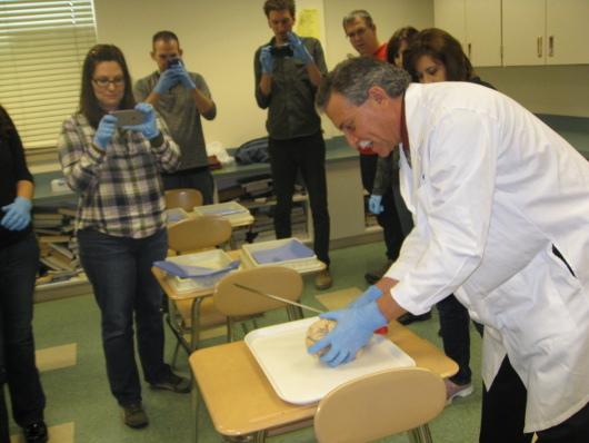 Preparing for a brain dissection at Penn Manor High School, Pennsylvania