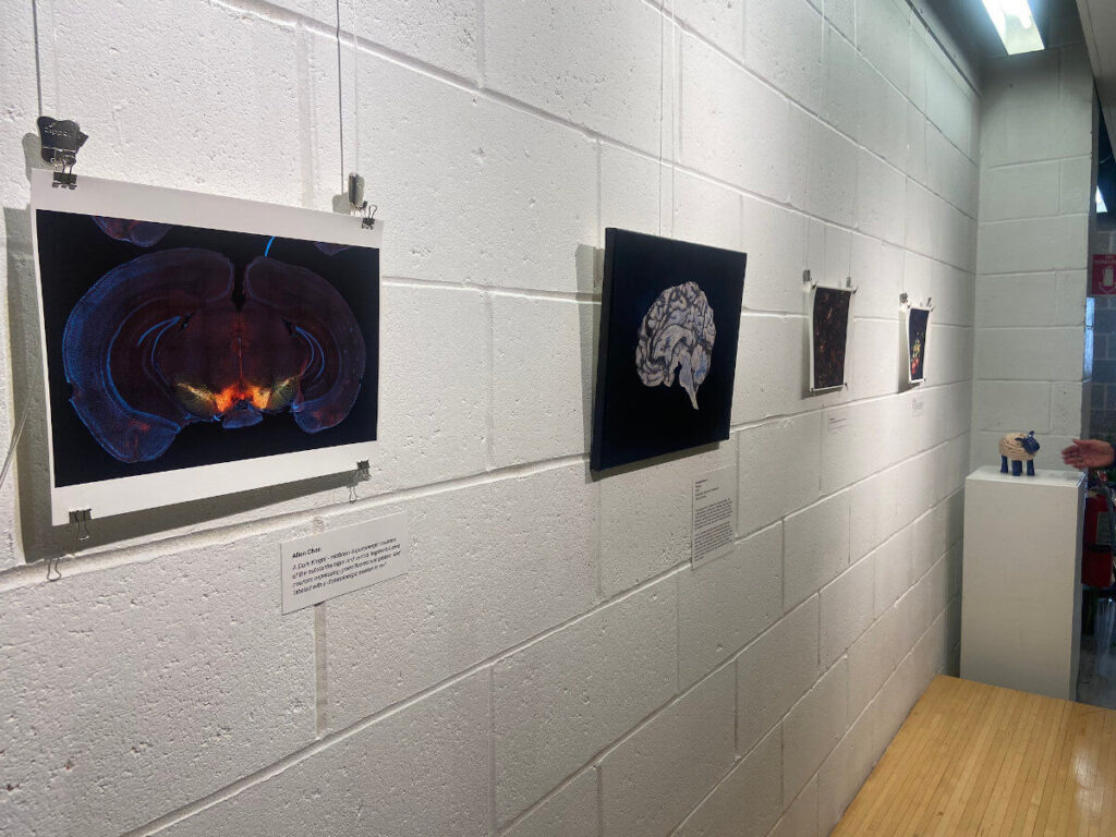 Art+theBrain Exhibit organized by Stony Brook University Department of Neurobiology & Behavior in New York.