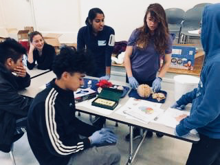 The human brain anatomy station at an event organized by The Lakeview Tutoring Program in North Carolina
