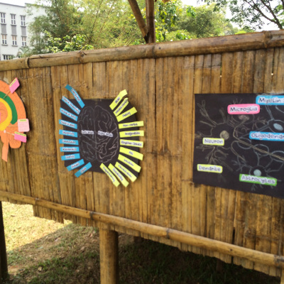 Brain Diagrams as part of BAW at the University of Malaya in Malaysia