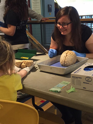A little girl holds a brain during a Neuroscience Training Program event organized by University of Wisconsin-Madison