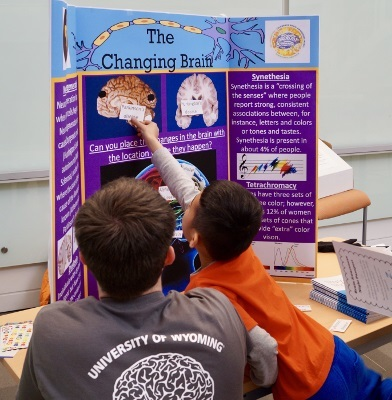 Children learn about the brain from a poster presentation at an event organized by University of Wyoming