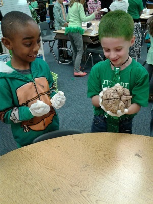 Children inspect brains during an event organized by the University of Kentucky