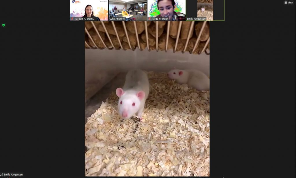 Online tour of the vivarium and research rats organized by the University of Wyoming Brainy Bunch.