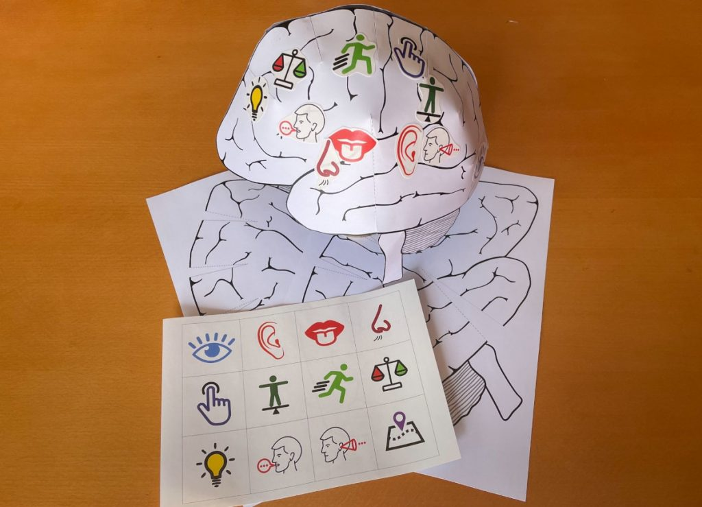 Over 500 cerebral hats were sent by post to the youngest participants of the Brain Days in the Tri-City organized by the University of Gdansk in Poland.